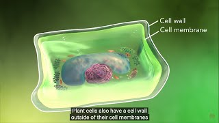 Why is the cell called structural and functional unit of life?