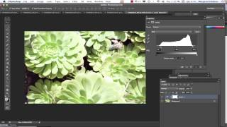 Working with Levels in Photoshop to create stronger Photos