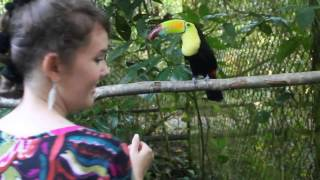 Katy Feeding a Toucan at the Belize Zoo