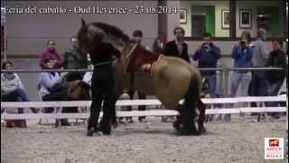 Concurso Morfologico Oud-Heverlee 2014 – Show
