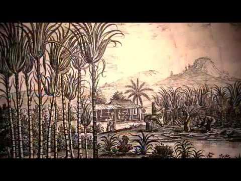 Tudo o que você deveria saber sobre a Cachaça ( História, Produção, Cursos, Sommelier etc)