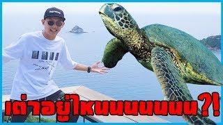 ไปหาเต่าที่เกาะเต่า!! l VRZO