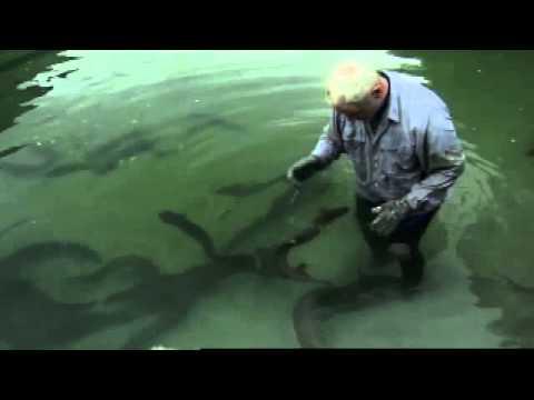 Die Parasiten der Fische und die Behandlung