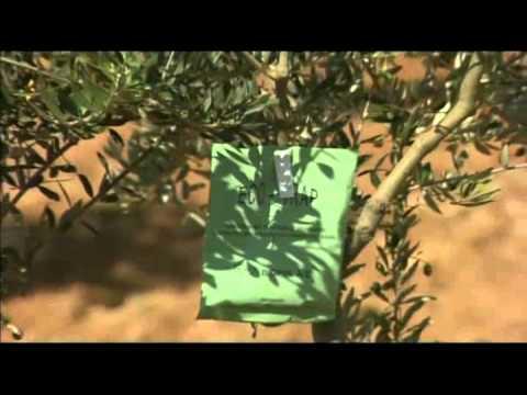 I rimedi di gente di unghia coltivati di trattamento con sale di tavolo