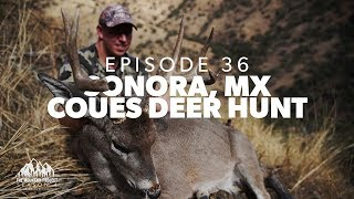It's Matt's Turn In Mexico - Ep.36 - Sonora Coues Deer Hunt