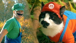 [Супер Кот Марио] Как снимали & Ответы на вопросы LIVE
