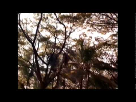~ Watch Full Movie Jungle Boy (1998)