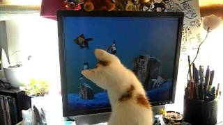 Little kitten goes fish