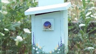 Caring For Bluebirds