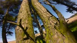 Summer in Sterling's wood - FPV Freestyle