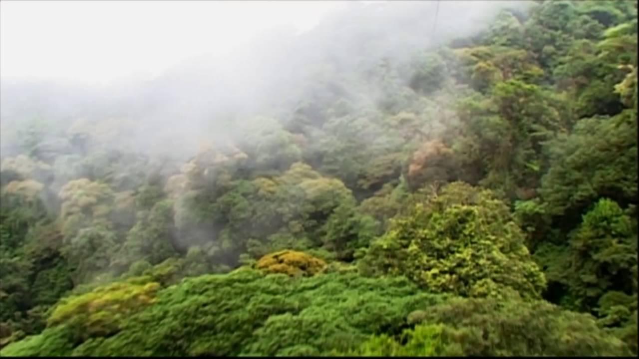 Costa Rica: Regenwald Pflanzen Zipline (0:46)