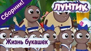 Лунтик 🐜 Жизнь букашек 🐜 Сборник мультфильмов