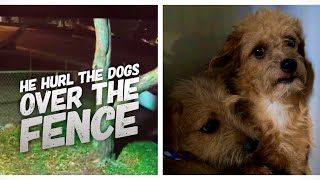 Cruel Man Flings Five Small Puppies Over Fence - Caught By Camera