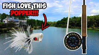 CRAZY Topwater Fly Fishing for BASS!!! | Fly Fishing for Bass with Poppers!