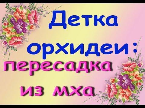 Детка ОРХИДЕИ:ПЕРЕСАДКА из МХА в КОРУ.Привет Наташе и Настеньке :)