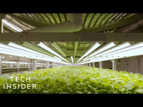 How Analyzing Plant Data Helps Vertical Farmers Have Control Over Plants