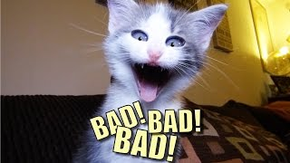 Talking Kitty Cat 44 - BAD! BAD! BAD!