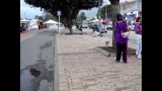 preview picture of video 'Perro en La Gaitana, Suba, Bogotá'