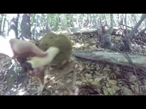 Quali unguenti da un fungo a piedi e unghie