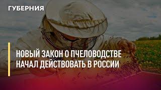 Новый закон о пчеловодстве начал действовать в России. Новости. 01/07/2021