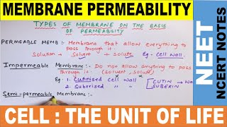 Why Plasma Membrane is Selectively Permeable Membrane ? | Permeability of Membrane |11 | NEET 2020