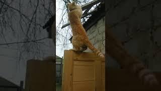 Прикол с котом. Кот неудачник