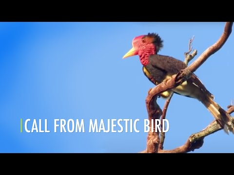 Call From Majestic Bird (Bahasa) Mp3