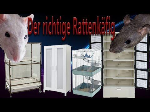 Rattenhaltung aber RICHTIG: der Rattenkäfig