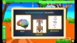 สื่อการเรียนการสอน ระบบประสาท ม.2 วิทยาศาสตร์