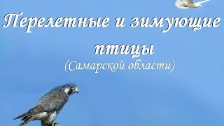 Презентация Птицы Самарской обл. и средней полосы России (для детей дошкольного возраста)