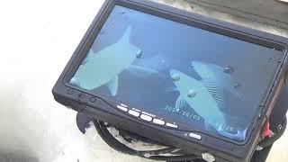 Камеры для рыбалки язь 52