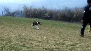 Olly E Le Pecore