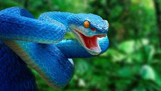 Most AMAZING Snakes In The World!