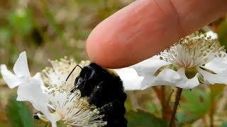 Petting A Bumble Bee Up Close 2019 | Mississippi Wildlife
