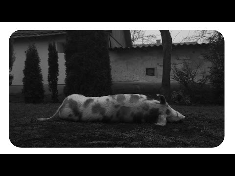 Hogyan lehet kideríteni, van- e szarvasmarha- féreg