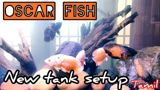 Oscar Fish Tank Setup Free Online Videos Best Movies Tv Shows
