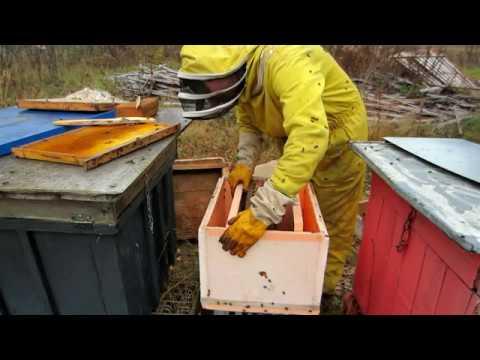 Пчеловодство.Экстерна пересаживаю отводок в пеноплексовый корпус для зимовки с сетчатым дном.