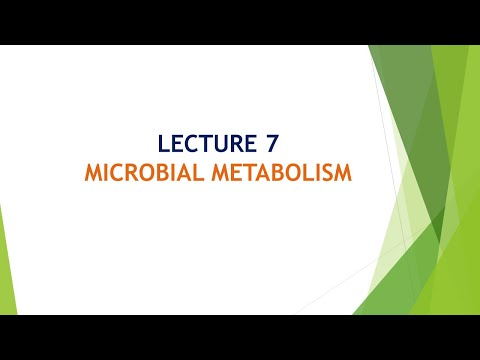 Microbial Metabolism part 3