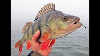 Платная рыбалка на веселовском водохранилище