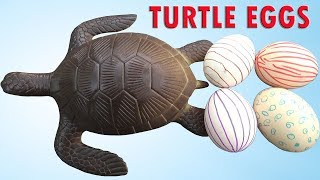 Săn Trứng Rùa – HUNTING TURTLE EGGS ❤ BIBI TV ❤