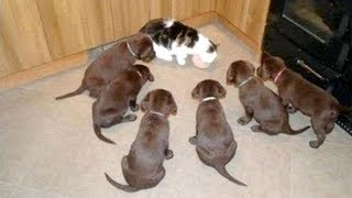 Cute FUNNY PUPPIES are the BEST ANIMALS - LAUGH NOW!