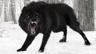 10 Amazing Wolves You Won't Believe Exist