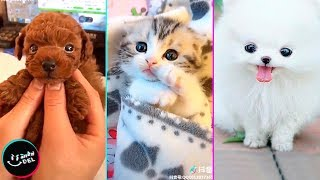 Videos Chistosos y Adorables de Animales