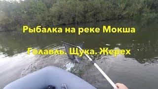 Рыбалка на мокше 2019 форум