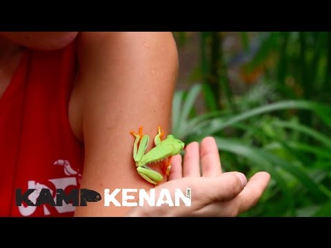 Red-Eyed Tree Frog, finally a Kamp Kenan Amphibian!