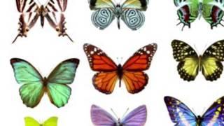 Misty Dixon - Love is Like a Butterfly