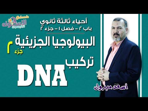 شرح أحياء ثانوية عامة | البيولوجيا الجزئيئة- تركيب الـ DNA | باب2-فصل1-ج2 | الاسكوله