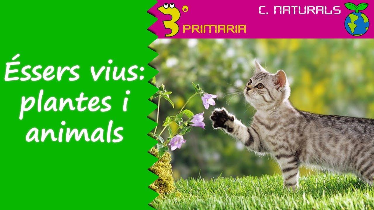 Ciències de la Naturalesa. 3r Primària. Tema 1. Grups d'éssers vius: plantes i animals