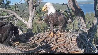 Big Bear Eagles * Dad Brought Appetizer * Mom Brought Main Course * Simba Shadow & Jackie * 7/6/19