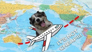 International Travel With a Pet   How to Get Your Dog on a Plane